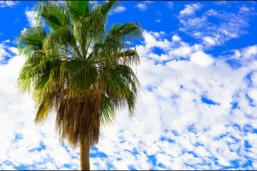 Thomas Tolkien. Palm Tree - Tenerife - Canary Islands – Holiday - CC BY 2.0